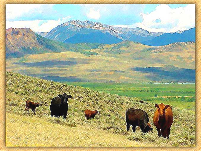 Mountain Cattle